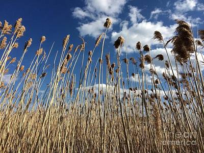 Fading Dream Photograph - Tall Grass by Barbara Chase