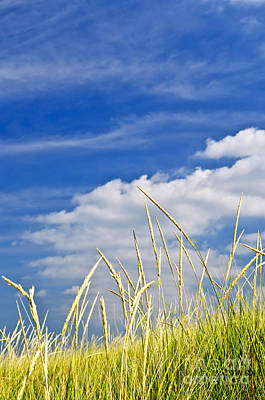Tall Grass On Sand Dunes Print by Elena Elisseeva