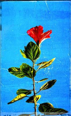 Hibiscus Painting - Tall Hibiscus - Flower Art By Sharon Cummings by Sharon Cummings
