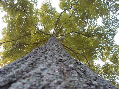 Tall Tree Print by Jenna Mengersen