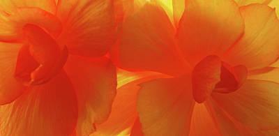 Tangerine Print by Tom Druin