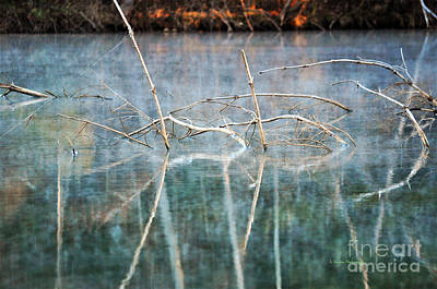 Photograph - Tangled by Li Newton