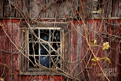 Red Barn In Winter Photograph - Tangled Up In Time by Lois Bryan