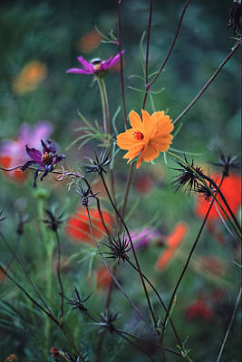 Tangles - A Dance Of Flowers And Weeds Print by Michael Flood