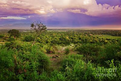 Wildlife Photograph - Tanzanian Bush. African Landscape. by Michal Bednarek
