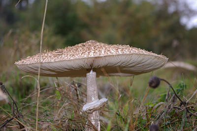 Taunus Photograph - Taunus Mushroom by Robert Kimble