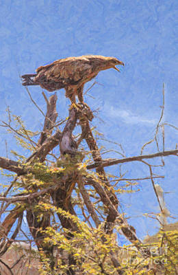Eagle Digital Art - Tawny Eagle  Aquila Rapax Calling From  Acacia Bush by Liz Leyden