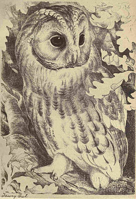 Professional Drawing - Tawny Owl by Unknown