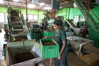 Ella Photograph - Tea Factory by Peter J. Raymond