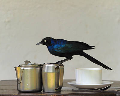 Starlings Photograph - Tea Time In Kenya by Tony Beck