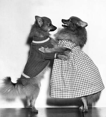 Dog Trots Photograph - Teaching A Young Dog New Trick by Underwood Archives