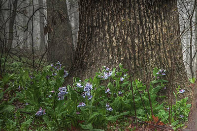 Tears Among The Bluebells Original by William Fields