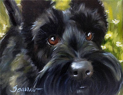 Scottish Dog Painting - Teddy by Mary Sparrow
