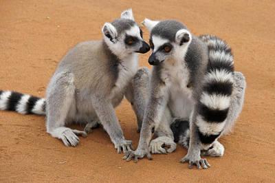 Lemur Tail Photograph - Telling Secrets by Michele Burgess