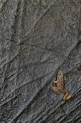 Frogs Photograph - Tenacity  by Jeff Sinon
