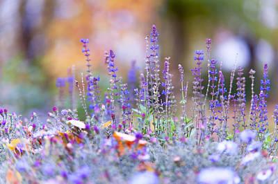 Tender Lavender Print by Jenny Rainbow
