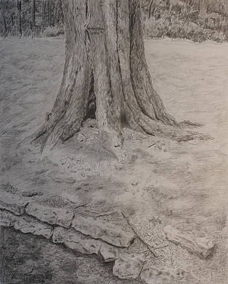 Warner Park Drawing - Tennessee Tree And Rock Wall by Arthur Witulski