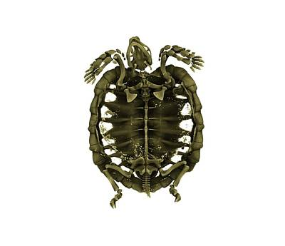 X-ray Image Photograph - Tent Tortoise by Dan Sykes/natural History Museum, London