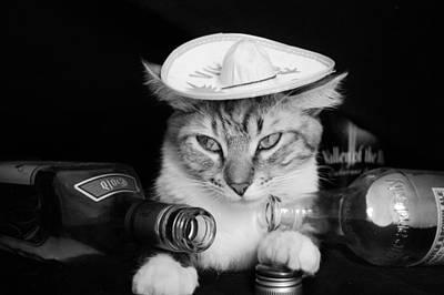 Tequila Cat Print by Cuca Montoya