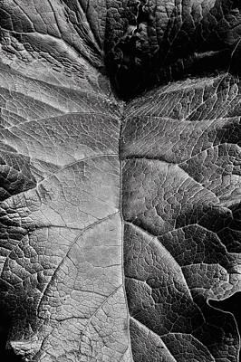 Terrestrial  Print by JC Findley