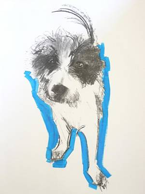 Scruffy Photograph - Terrier, 2012 Charcoal And Oil On Paper by Sally Muir