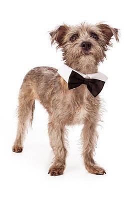 Terrier Mix Wearing Bow Tie Print by Susan  Schmitz