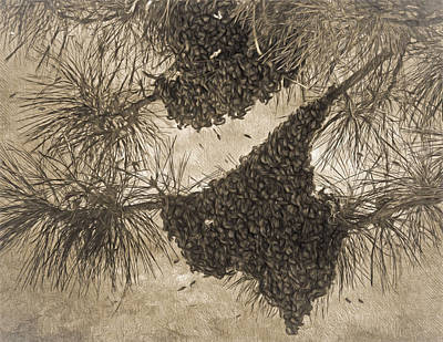 Texas Bees ? Print by Donna Kennedy