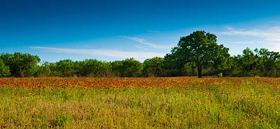 Texas Hill Country Meadow Print by Darryl Dalton