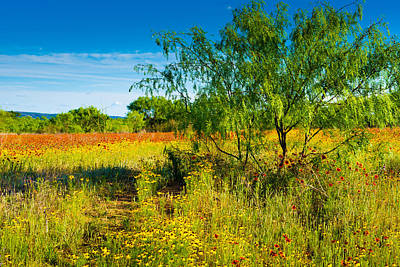 Hill Country Photograph - Texas Hill Country Wildflowers by Darryl Dalton