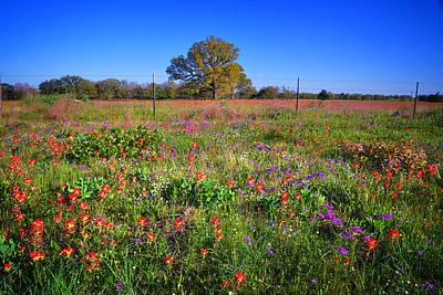 Spring Photograph - Wild Texas by Lynn Bauer