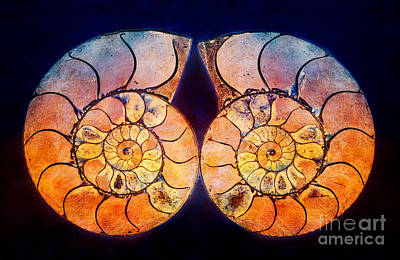 Shell Photograph - Textured And Painted Ammonite Fossils by Mimi Ditchie