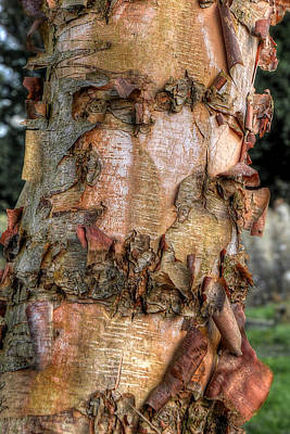 Textured Bark Print by Gill Billington