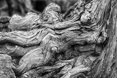 Tree Roots Digital Art - Textures Of Nature Black And White by Jack Zulli