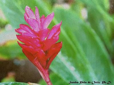 Texturized Red Ginger Flower Original by Sandra Pena de Ortiz