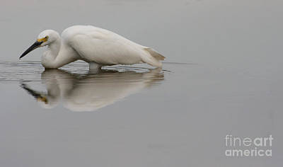 Egret Photograph - That Bird Keeps Lookin At Me by Ruth Jolly