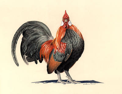 Rooster Drawing - That'll Be The Day by Katherine Plumer