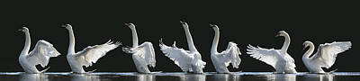 Wings Photograph - The 7 Swans by Jeanette Rosenquist