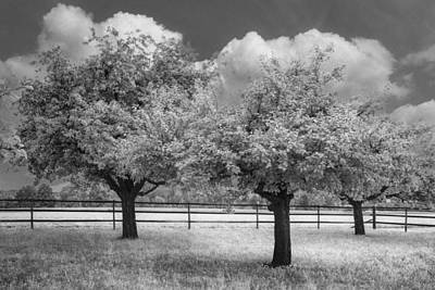 Peach Photograph - The Apple Orchard by Debra and Dave Vanderlaan