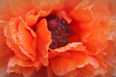 Poppy Photograph - The Art Of Poppy by  The Art Of Marilyn Ridoutt-Greene