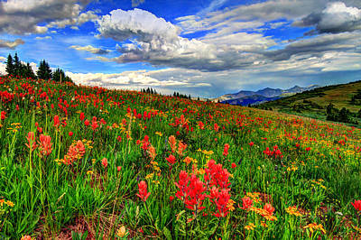 Vail Photograph - The Art Of Wildflowers by Scott Mahon
