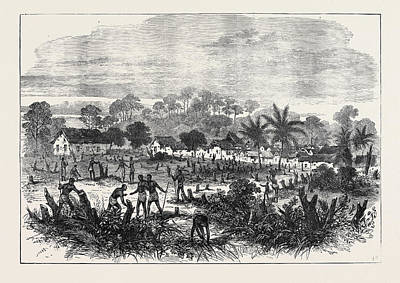1874 Drawing - The Ashantee War The Battle-field Of Abrakrampa 1874 by English School