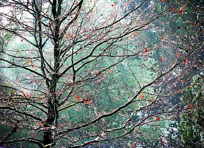 The Aura Of Trees Print by Angela Davies