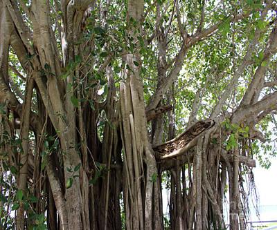 The Banyan Tree Print by Megan Dirsa-DuBois