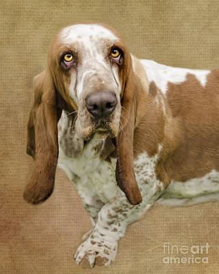 Breed Digital Art - The Basset Hound by Linsey Williams