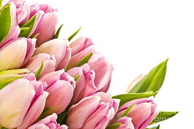 The Beautiful Purple Tulips Print by Boon Mee