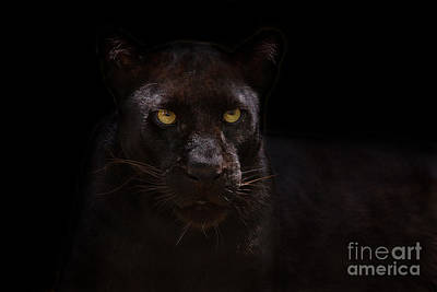 The Beauty Of Black Print by Ashley Vincent