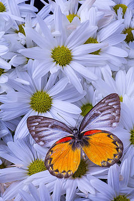 The Beauty Of Butterflies Print by Garry Gay