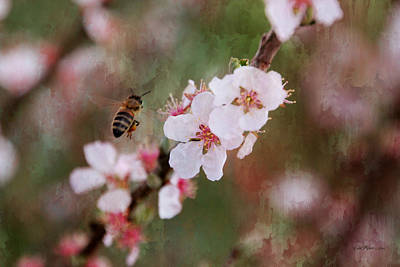 Manipulation Photograph - The Bee In The Cherry Tree by EricaMaxine  Price