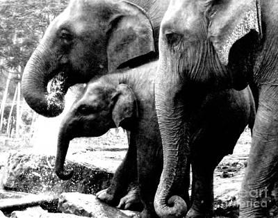 Elephant Photograph - The Big Family by Surendra Silva