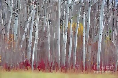 The Birches - Single Print by Andrea Kollo